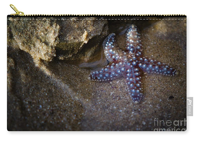 San Diego Carry-all Pouch featuring the photograph Lone Seastar by Doug Sturgess