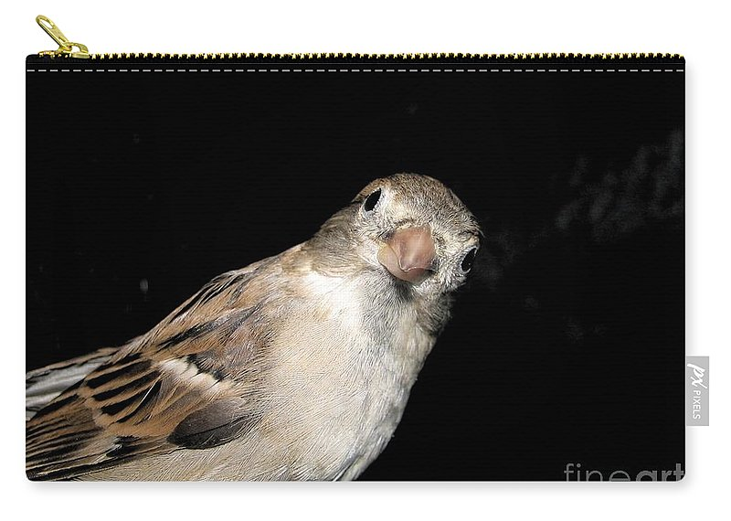 Face Carry-all Pouch featuring the photograph Look At Me by Art Dingo