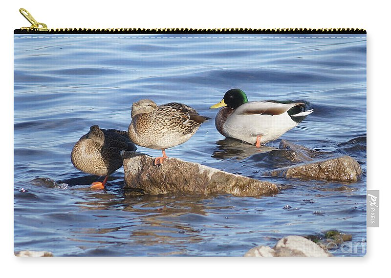 Mallards Carry-all Pouch featuring the photograph Look One Leg by Lori Tordsen