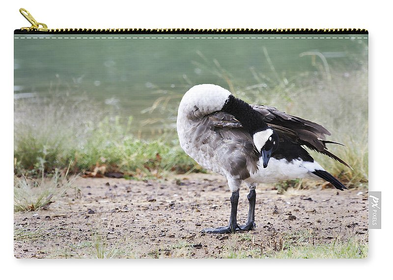 Canadian Goose Carry-all Pouch featuring the photograph Looking Back by Douglas Barnard