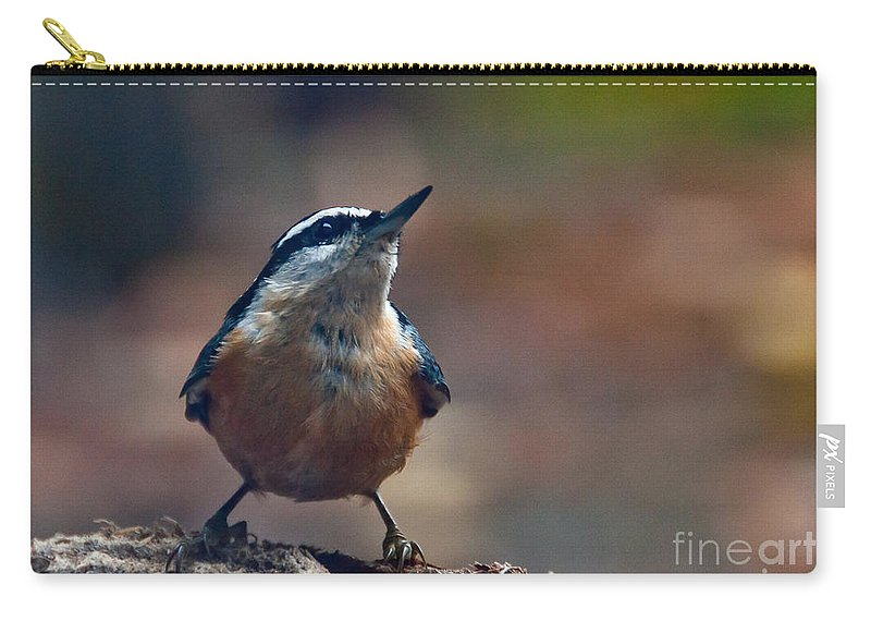 Nuthatch Carry-all Pouch featuring the photograph Looking Up by Cheryl Baxter