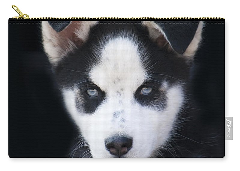 Lop Eared Siberian Husky Puppy Carry All Pouch For Sale By Kathy Clark