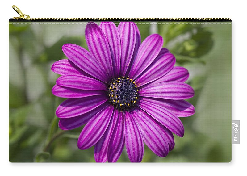 African Carry-all Pouch featuring the photograph Lovely African Daisy - Osteospermum by Kathy Clark