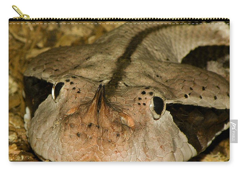 Snake Carry-all Pouch featuring the photograph Lower Than Low by Trish Tritz