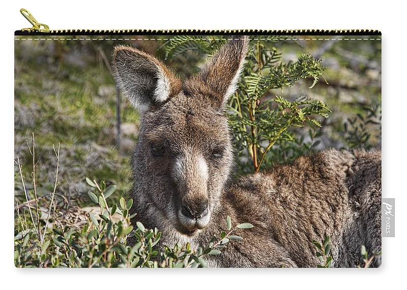 Wallaby Carry-all Pouch featuring the photograph Lying Low by Douglas Barnard