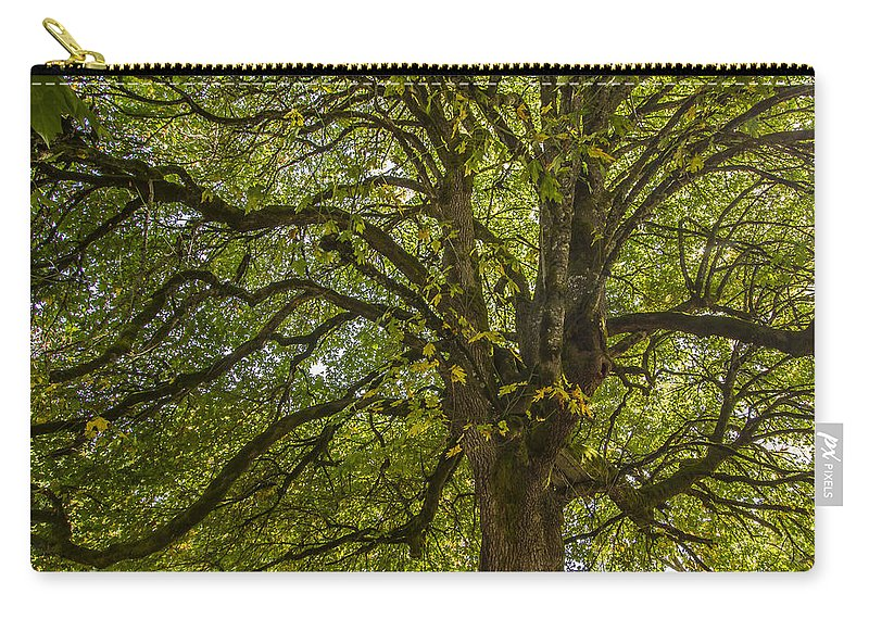 Tree Carry-all Pouch featuring the photograph Majestic Tree by Jean Noren