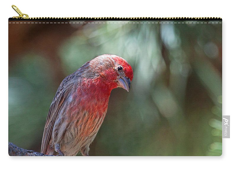 House Finch Canvas Print. House Finch Photograph Carry-all Pouch featuring the photograph Male House Finch by Jim Garrison