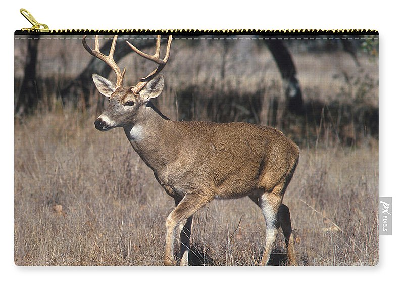 Whitetail Deer Carry-all Pouch featuring the photograph Male White-tailed Deer by Science Source