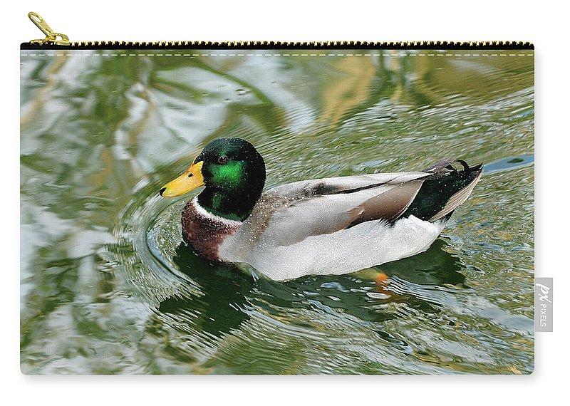 Mallard Carry-all Pouch featuring the photograph Mallard Duck by Bill Dodsworth