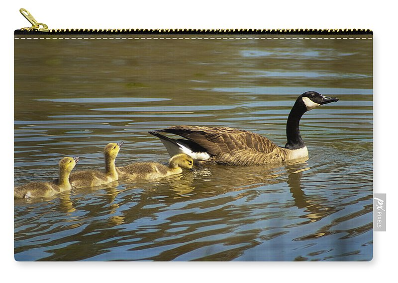 Canadian Carry-all Pouch featuring the photograph Mama Honker And Goslings by Kathy Clark