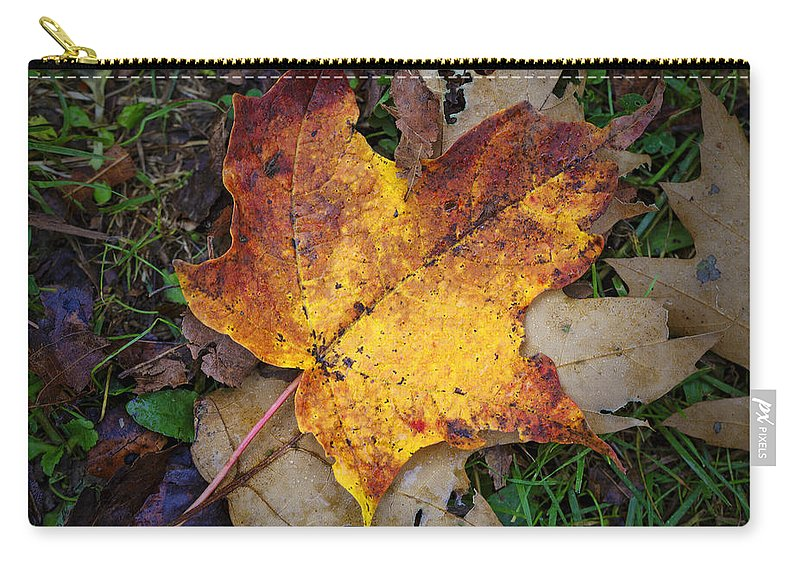 Maple Leaf Carry-all Pouch featuring the photograph Maple Leaf In Fall by Rick Berk