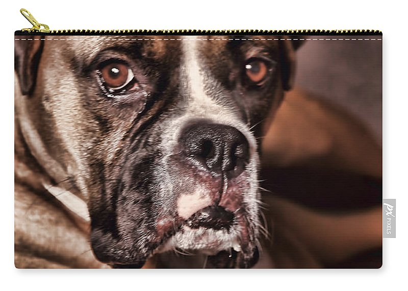 Boxer Carry-all Pouch featuring the photograph Meet Rocky by Deborah Benoit