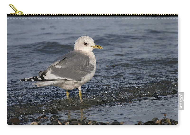 Alaska Carry-all Pouch featuring the photograph Mew Gull by Doug Lloyd
