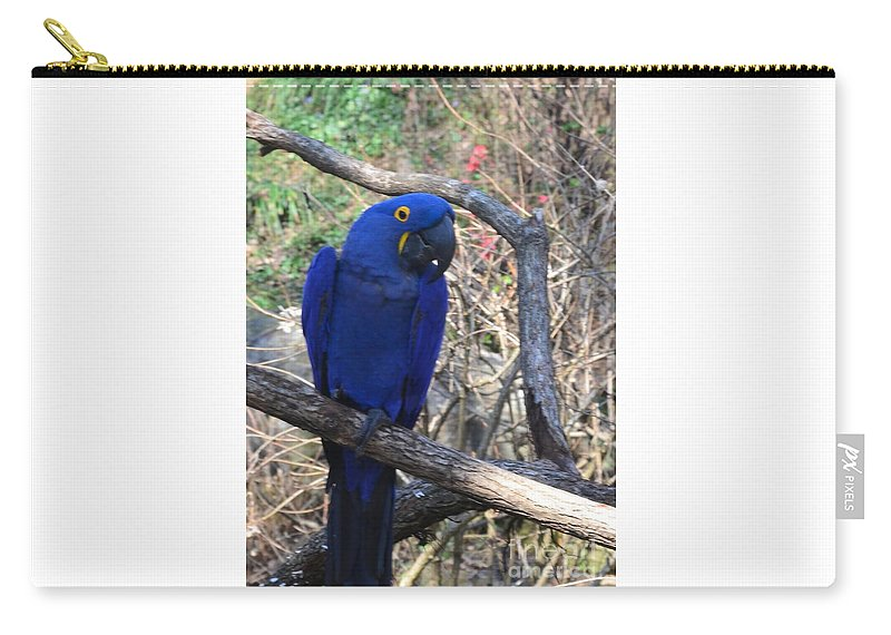Mac-caw Carry-all Pouch featuring the photograph Midnight Blue by Kathleen Struckle