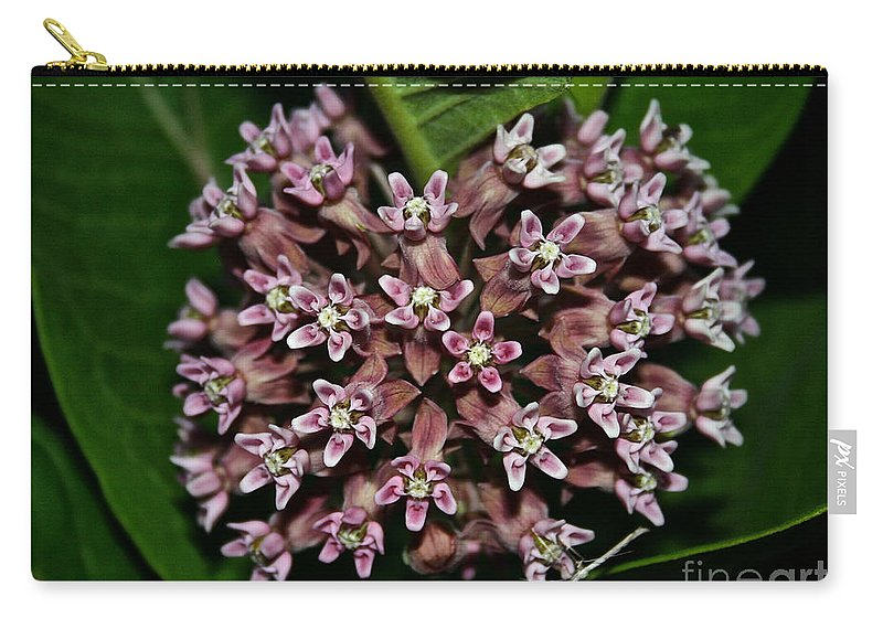 Outdoors Carry-all Pouch featuring the photograph Milkweed by Susan Herber