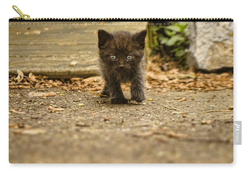 Kitten Carry-all Pouch featuring the photograph Miniature Stalker by Heather Applegate