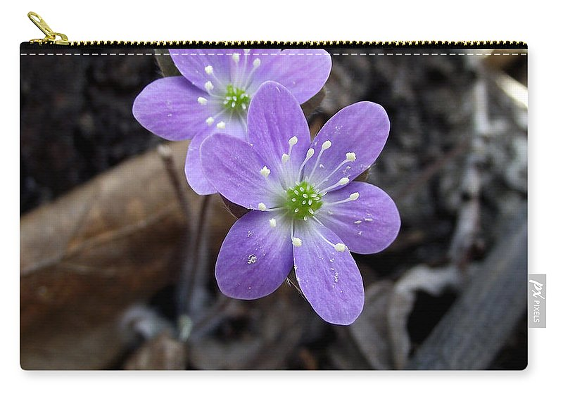 Minnesota Carry-all Pouch featuring the photograph Minnesota Spring Wildflower by Brenda Hagenson