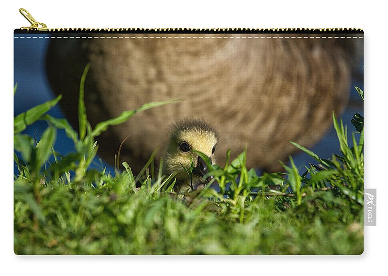Geeseling Carry-all Pouch featuring the photograph Mom Is Close Behind by Karol Livote