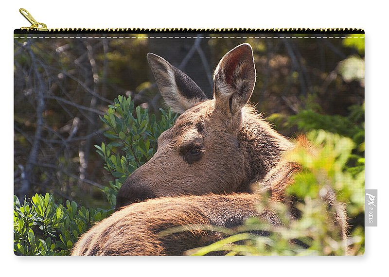 Moose Carry-all Pouch featuring the photograph Moose Baby 5 by Glenn Gordon