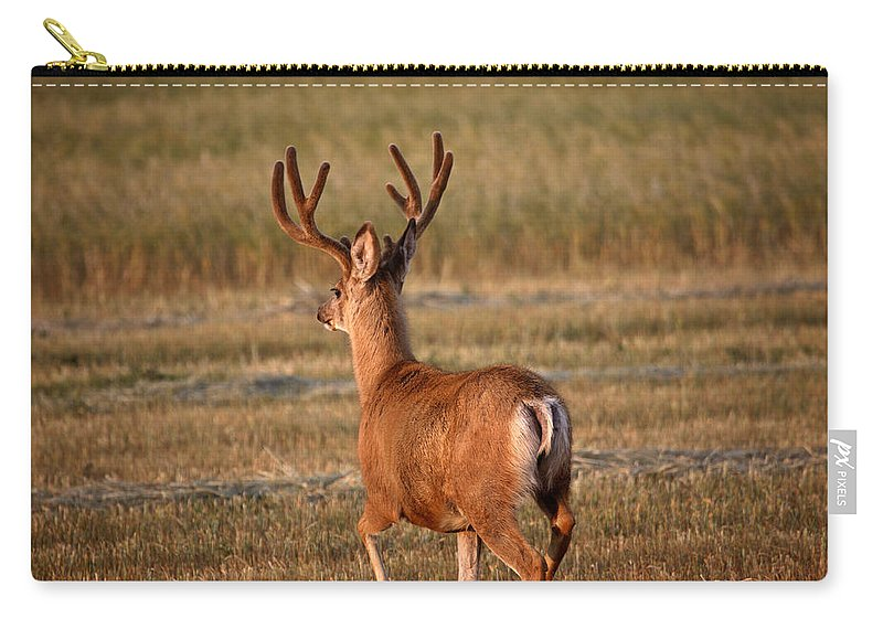 Mule Deer Carry-all Pouch featuring the photograph Mule Deer Buck In An Alberta Field by Mark Duffy