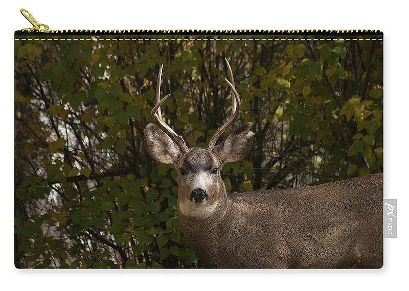 Deer Carry-all Pouch featuring the photograph Mulie Buck by Ernie Echols