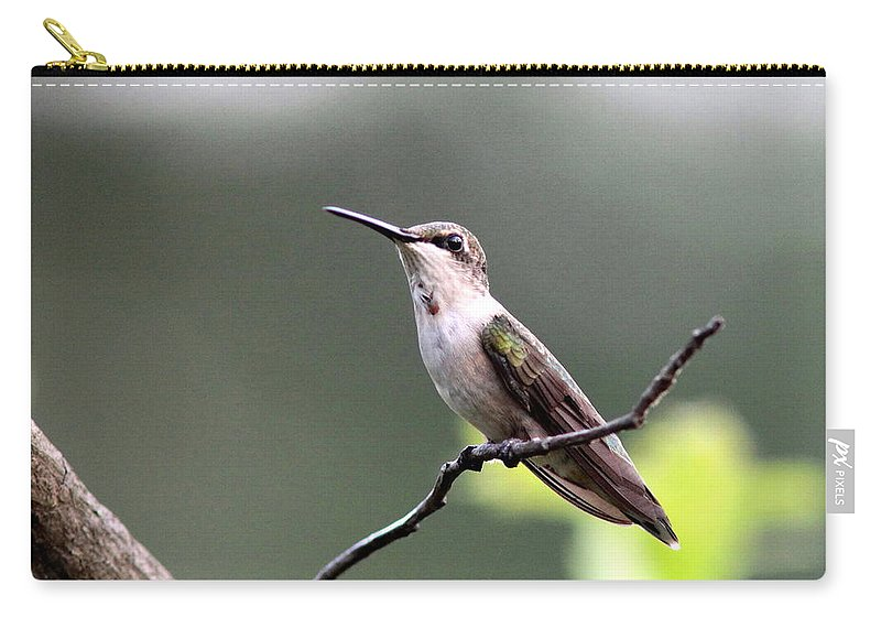Hummingbird Carry-all Pouch featuring the photograph My Colors Are Coming by Travis Truelove