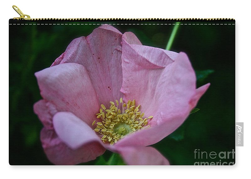 Plant Carry-all Pouch featuring the photograph Nearly Spent Rose by Susan Herber