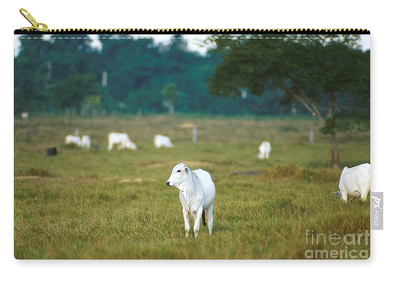 Cow Carry-all Pouch featuring the photograph Nelore Beef Cattle by Science Source