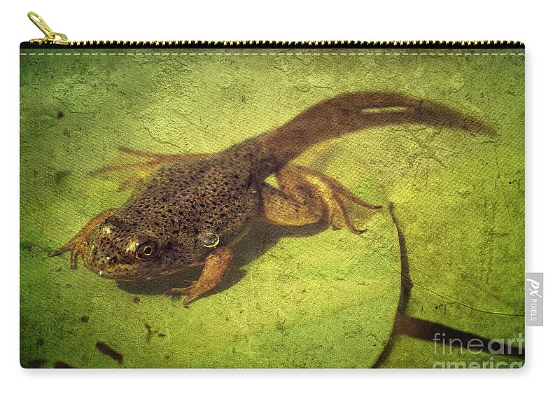 Frog Carry-all Pouch featuring the photograph New Life by Aimelle