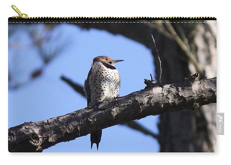Northern Flicker Carry-all Pouch featuring the photograph Northern Flicker by Travis Truelove