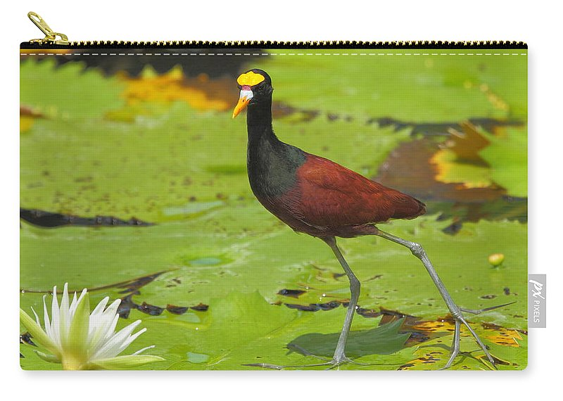 Northern Jacana Carry-all Pouch featuring the photograph Northern Jacana by Andrew McInnes
