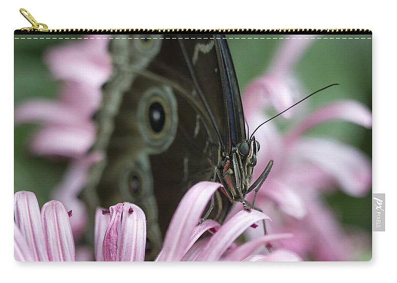 Butterfly Carry-all Pouch featuring the photograph Northern Pearly-eye On Pink by Bill Tiepelman