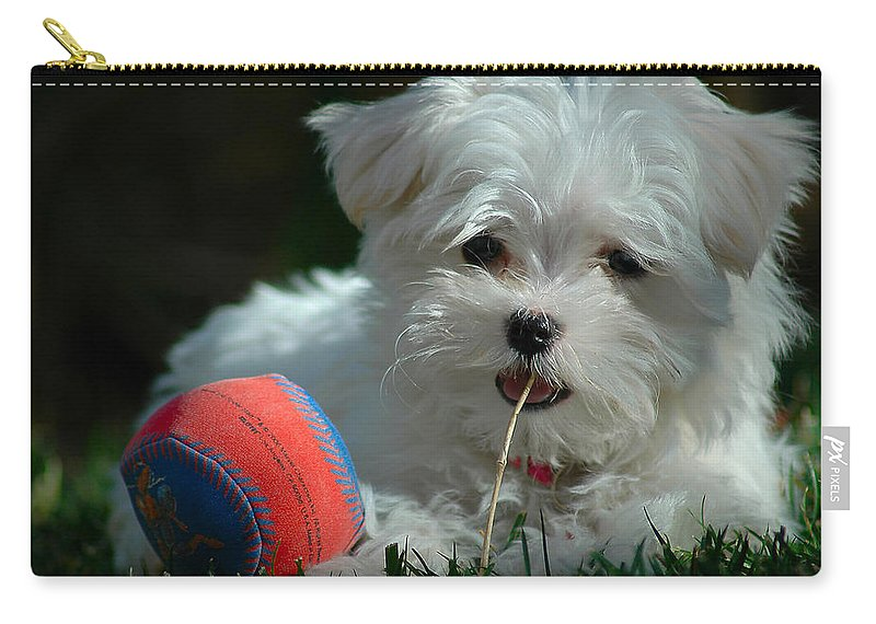 Dogs Carry-all Pouch featuring the photograph Not Just Sugar And Spice by Lynn Bauer