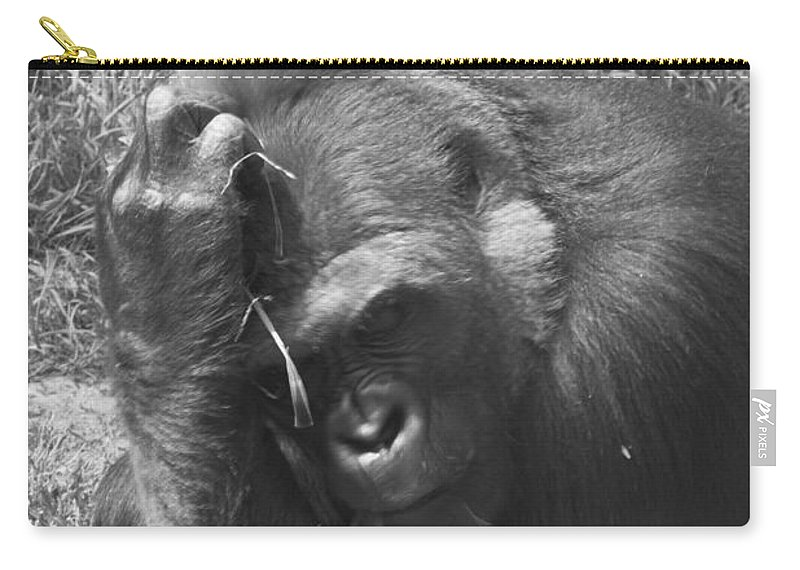 Gorilla Carry-all Pouch featuring the photograph Oh My Head by Scott Hervieux