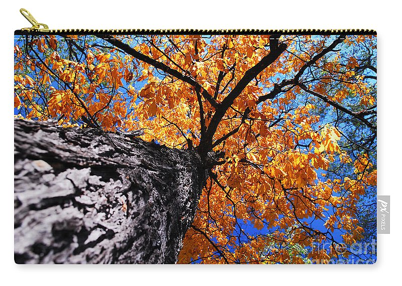 Tree Carry-all Pouch featuring the photograph Old Elm Tree In The Fall by Elena Elisseeva