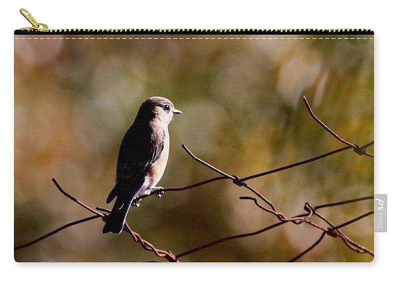 Bluebirds Carry-all Pouch featuring the photograph On The Arbor by Travis Truelove