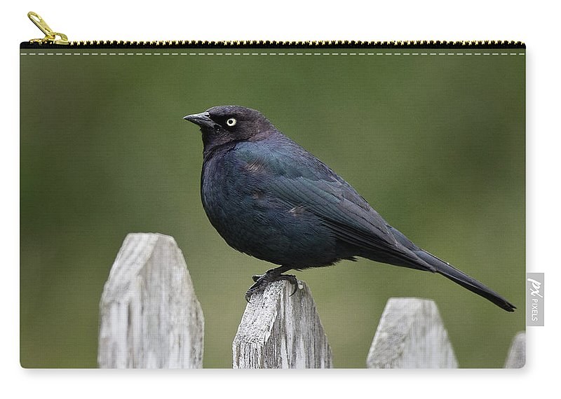 Fence Carry-all Pouch featuring the photograph On The Fence by Greg Nyquist