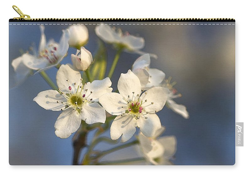 Bradford Pears Carry-all Pouch featuring the photograph One Fine Morning In Bradford Pear Blossoms by Kathy Clark