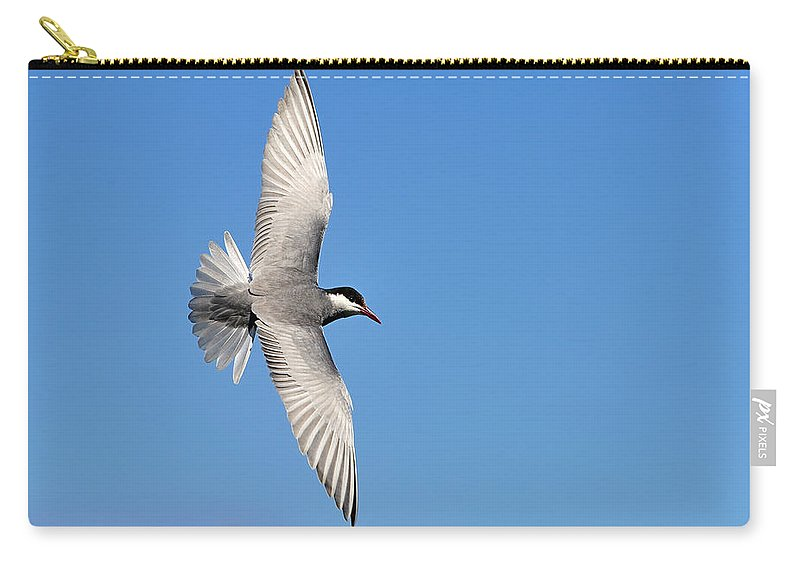 Whiskered Tern Carry-all Pouch featuring the photograph One Good Tern Deserves Another by Tony Beck
