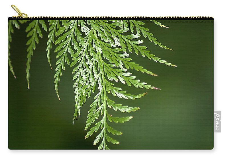 Fern Carry-all Pouch featuring the photograph One Hanging Fern by Carolyn Marshall