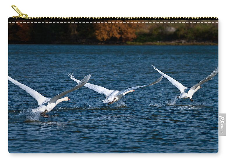 Mute Swans During Takeoff Carry-all Pouch featuring the photograph One Two Three Go by Randall Branham