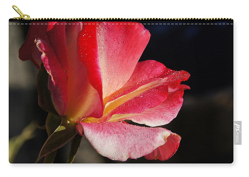 Rose Carry-all Pouch featuring the photograph Open Rose After The Rain by Mick Anderson