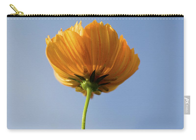 Cosmos Carry-all Pouch featuring the photograph Orange Cosmos Too by Rich Franco