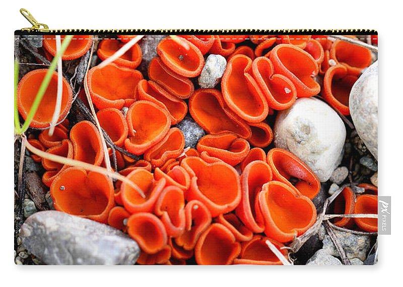 Doug Lloyd Carry-all Pouch featuring the photograph Orange Peel Fungus by Doug Lloyd