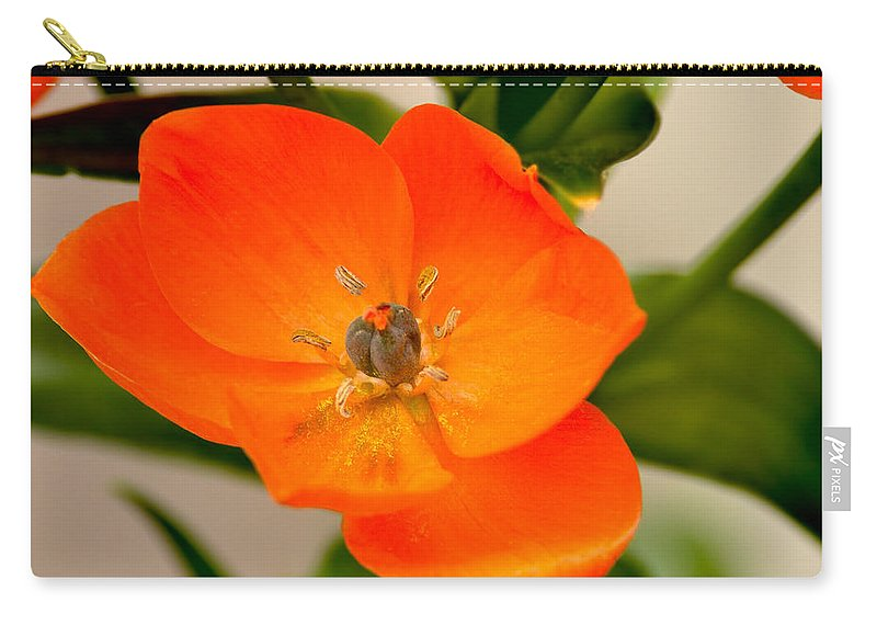 Orange Star Carry-all Pouch featuring the photograph Orange Star  by William Jobes