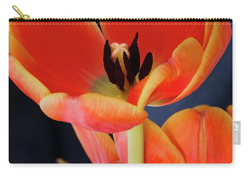 Blossom Carry-all Pouch featuring the photograph Orange Tulips by Gary Eason