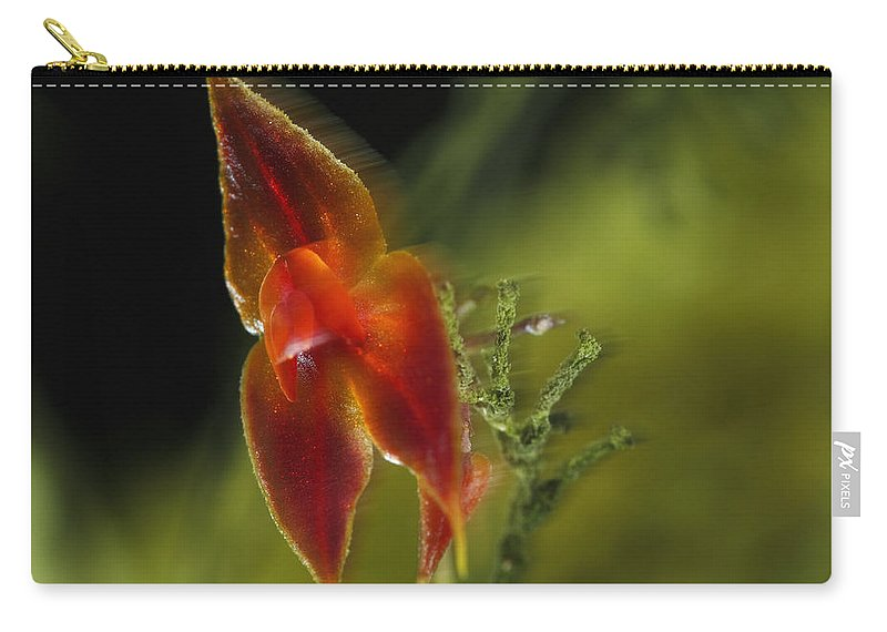 00462798 Carry-all Pouch featuring the photograph Orchid Panama by Christian Ziegler