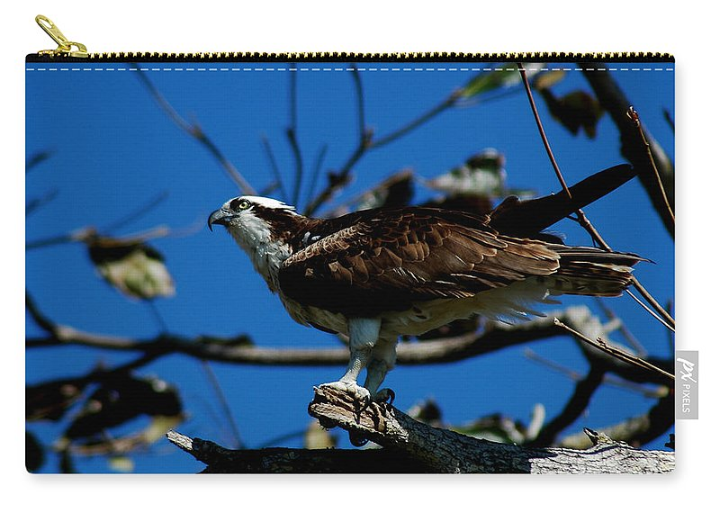 Osprey Carry-all Pouch featuring the photograph Osprey 2 by David Weeks