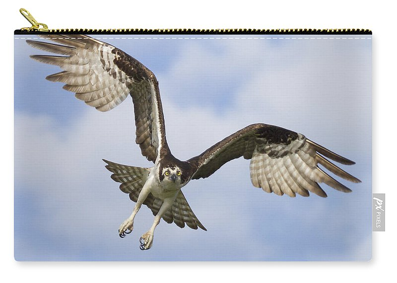Florida Carry-all Pouch featuring the photograph Osprey In Flight One by Bill Swindaman