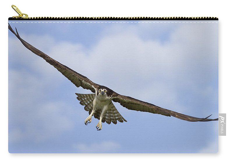 Osprey Carry-all Pouch featuring the photograph Osprey In Flight Two by Bill Swindaman